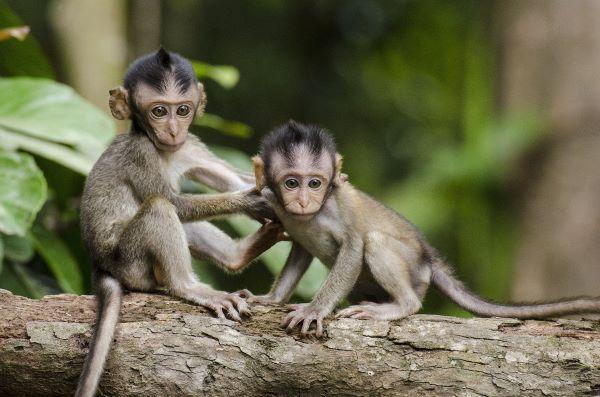 Monkeys as exotic pets