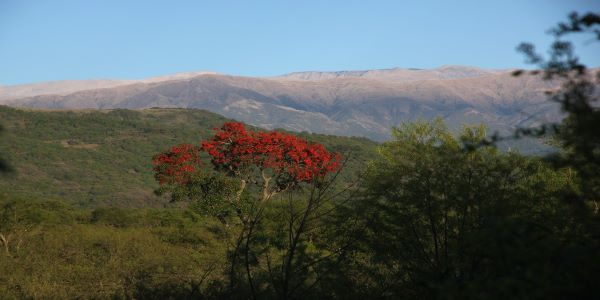 Tropical Andes biodiversity hotspot