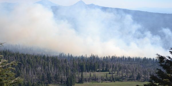 Wildfire threat to old trees