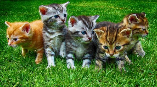 Kittens with genetic diversity